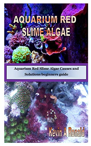 AQUARIUM RED SLIME ALGAE: Aquarium Red Slime Algae Causes and Solutions beginners guide