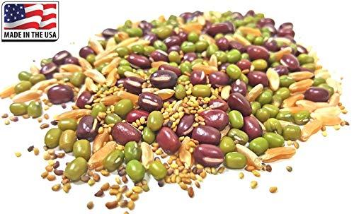 Samen-Paket Nicht Pflanzen: 3X Micro Grüner Deckel + 36G 1500: Red Clover Adzuki Kamut Mungbohne keimenden Samen USDA