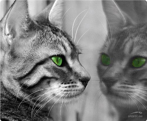 SILK Mousepad, Cat