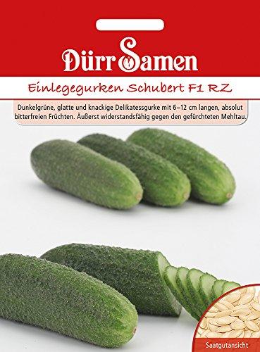 Dürr Samen 4417 Freilandgurke Schubert RZ F1 (Freilandgurkensamen)