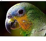 Paint by Numbers Art Parrot Plant Flower Pintura digital sin marco para adultos 40 x 50 cm Pintura al óleo pintada a mano para arte de pared Imagen Decoración del hogar
