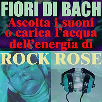 Rock Rose - (Ascolta i suoni o carica l'acqua dell'energia di Rock Rose)