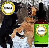 Fleurs de Bach Animal agressif (chien, chat.) – Mélange Fleurs de Bach Original-Velbecia- pour accepter la présence d'un autre animal, d'une autre personne et atténuer l'agressivité - 30 ml