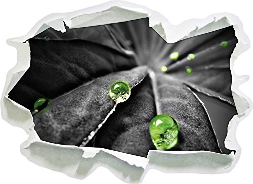 Raindrops on Plante, Papier 3D Sticker Mural Taille: 62x45 cm décoration Murale 3D Stickers muraux Stickers