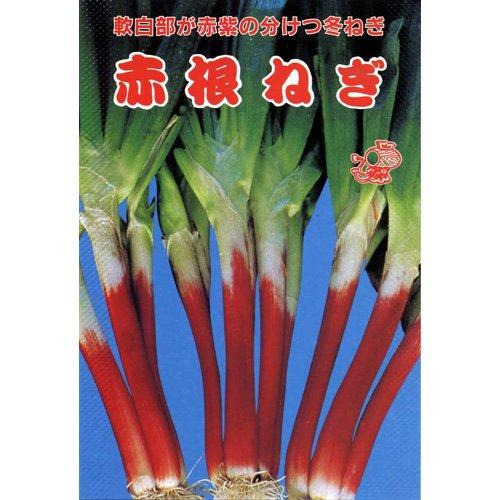 ネギ 種 赤根ねぎ 小袋(約4ml)