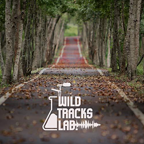 Park Ambience and Neighborhood Background Sounds (Rural Village´s Bike Lane) [Vol.1]