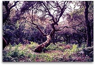 CALVENDO Lienzo Premium de 120 x 80 cm, Formato Transversal de Laurel sobre Madeira, Imagen HD sobre Bastidor, preacabado en Fieltro, impresión en Lienzo de Val Thoermer (calvento Natural)