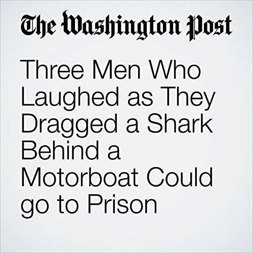 Three Men Who Laughed as They Dragged a Shark Behind a Motorboat Could go to Prison copertina