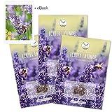 900x semi di lavanda ad alto tasso di germinazione - versatile pianta medicinale e ideale per api e farfalle (incl. ebook gratuito)