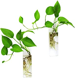 Ivolador Wall Hanging Glass Propagation Plant Terrarium Container Rectangle Shape Perfect for Propagating Hydroponic Plant...