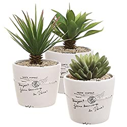 pots and containers indoor plant pots and unusual planters for sale