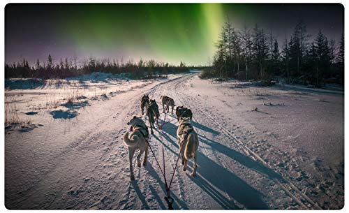 DesFoli Husky Hundeschlitten Nordlichter Wandtattoo Wandsticker Wandaufkleber R2459 Größe 70 cm x 110 cm