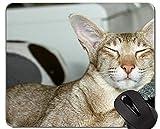 Yanteng Alfombrillas de ratón, Alfombrilla de ratón Gris de Pelo Corto Cat Kitten Gaming Custom, Alfombrilla de ratón Cat con Borde Cosido