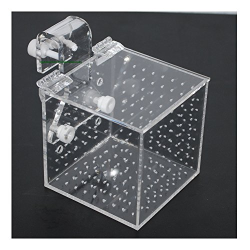 Aquarium Isolationsbox / Quarantänebox, Ablaichkasten, Aufzuchtkasten, Box für Korallenableger, 10x10x10 cm