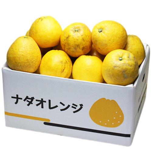 「訳ありナダオレンジ5×2」(別名:河内晩柑,かわちばんかん,宇和ゴールド,ジューシーオレンジ,美生柑,愛南ゴ フルーツ 果物 通販 10kg