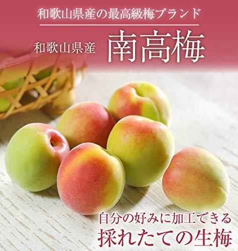 梅 紀州 南高梅 和歌山県産 秀品 Mサイズ 約2kg 梅酒用レシピ付き うめ 青梅 生梅