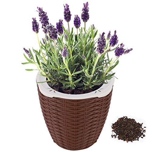 Dooreemee Lavender Plant,DIY Mini Lazy Flower Pot, Automatic Water Absorption Funny Potted Plant with high Grade for Cultivating Kid s Planting Hobbies and Decorating Home & Office