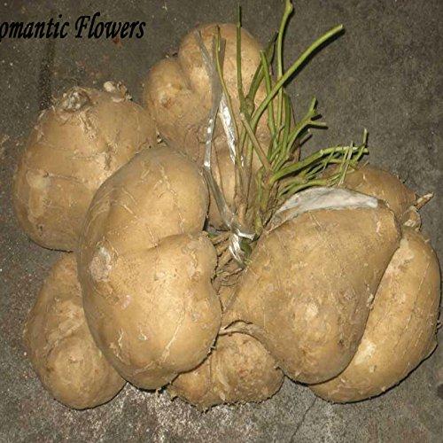 Graines Yam Bean, fruits et légumes très douce, à haut rendement doux Graines de pommes de terre, légumes délicieux et 10 particules / sac