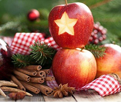 bonsaï nain 50 graines cueillir des fruits délicieux dans votre jardin facile -growing Bonsai FruitFree Livraison 8