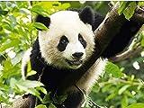 khgtsz Pintura De Diamantes Decoración del Hogar DIY 5D Bordado De Diamantes Panda Punto De Cruz Set Pintura Al Óleo Abstracta Resina Hobby Craft 40x50cm