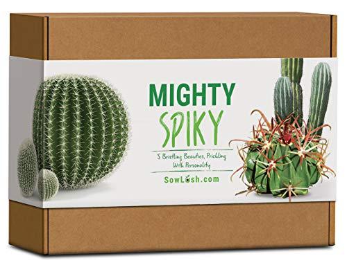 Mighty Spiky Kaktus-Geschenk-Samenset. Everything You Need to Grow Haarpflege-Set, mit Persönlichkeit, 5 Stück