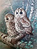 Paint by Numbers Kits DIY Oil Painting Home Decor Wall Value Gift - Two Cute Owls 16X20 Inch (No Frame)