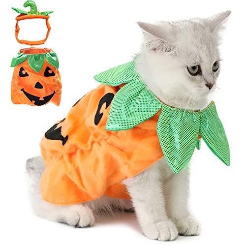 Legendog - Disfraz de gato y perro para Halloween con diseño de...