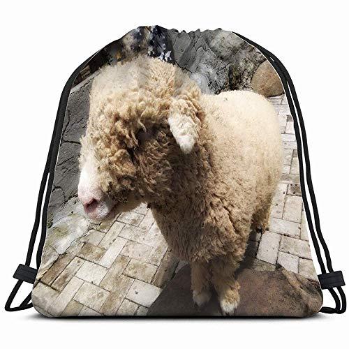 surce schapen Stood Wachten Voedsel Dieren Wildlife Landbouwparken Outdoor Trekkoord Rugzak voor Kinderen Jongens Meisjes Tieners Verjaardagscadeau Tas Gym Cinch Zak voor School en Partij 14x17 Inches