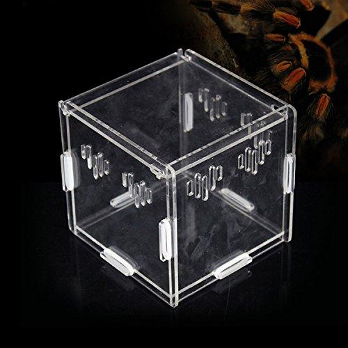 Scatola acrilica trasparente Serbatoio Piccolo Animale Custode Auto-assemblaggio Insetti Rettili Terrario Habitat (11*11*11cm)