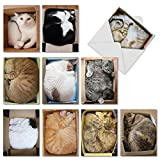 The Best Card Company - 10 All Occasion Blank Cat Cards (4 x 5.12 Inch) - Cute Assorted Bulk Card Set - Square Cats M4623OCB-B1x10