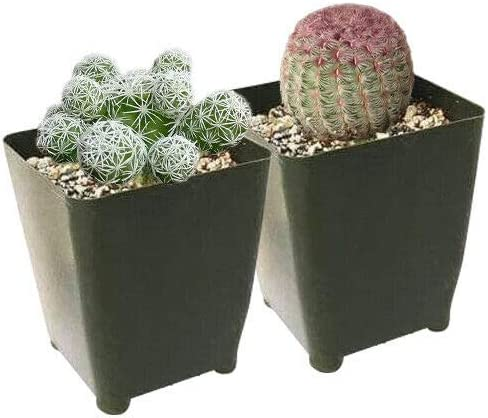 Succulent Plant Special price _ Cactus Buch4Land 2 by 35% OFF Pack