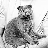 Klug - Gestresste Katzen