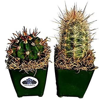 Fat Plants San Diego Cactus Plants Variety Package of Indoor or Outdoor Cacti Plants for Gardens Home Decor or Gifts  2