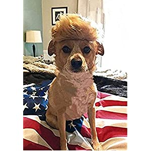 Dog Wig Pet Costume, Donald Cat Wig Head Wear for Halloween, Christmas, Parties, Festivals