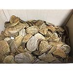 Original-Seemandelbaumbltter-10cm-Catappa-Leaves-TOP-Qualitt-10-1000-Stck-Ketapang-Indian-Almond