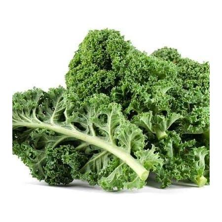 Dwarf Siberian Kale SeedsKale Seeds for Planting Home GardensNon-GMO