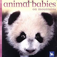 Animal Babies On Mountains