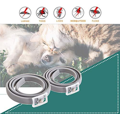 LVYI Los perros y gatos mascotas Pulga Collares In Vitro La desparasitación Pre-pulgas piojos del gato collares collares de perro gatos de medida adaptable y el collar Perros universal in vitro La des