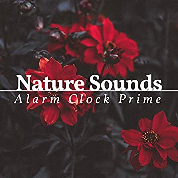 Nature Sounds Alarm Clock Prime - 2 Hours of Nature Sounds Alarm Clock
