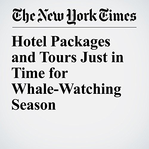 Hotel Packages and Tours Just in Time for Whale-Watching Season copertina