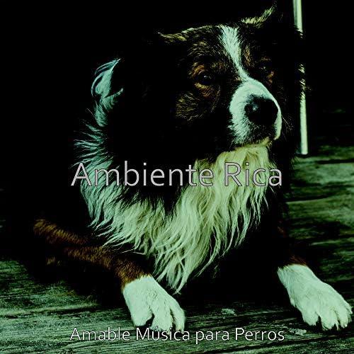 Amable Música para Perros