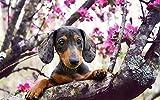 Diy pintura para adultos negro lindo perro perro perro perro animal pintura por número kit en lienzo para principiantes 40*50cm