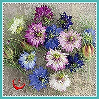 1Bag/400Pcs Attractive Impressive Love in a Mist Seeds High Quality DIY Home Garden Seed