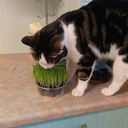 Cat Grass Kits x3 and Extra Strong Catnip x1 By Cat FurNature