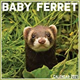 Baby Ferret Calendar 2021: Official Baby Ferret Calendar 2021, 12 Months
