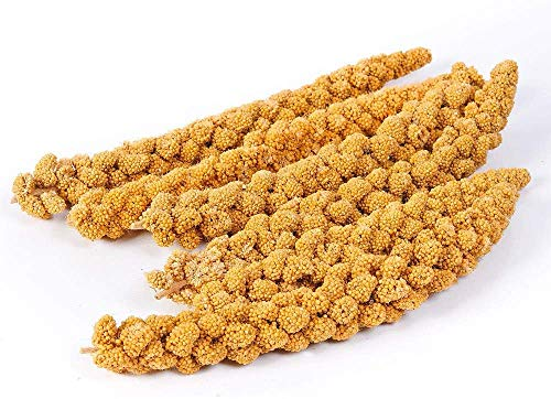 Pet Ting Millet Sprays Naturalmente crecido y mano Picked 1 kg