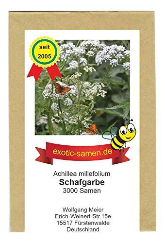 Gemeine Schafgarbe - Achillea millefolium - Bienenweide - Zier- und Arzneipflanze - 3000 Samen