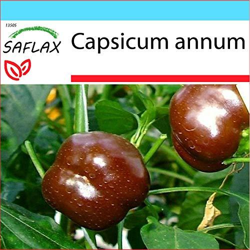 SAFLAX - Kit cadeau - Paprika - Sweet Chocolate X - 10 graines - Capsicum annum