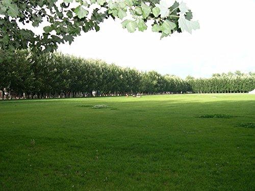 100pcs / sac grassseeds pour garen et jardin bricolage en plein air Livraison gratuite