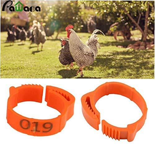100 Stück Huhn Ring mit veränderbarer Länge Geflügelbein Digital Label Buckle Ring für Chicken Ente Geflügel Hofbedarf zufällige Farbe